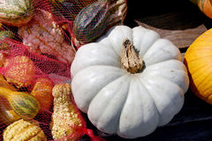 Albno Pumpkin and Gourds Royalty Free Stock Images