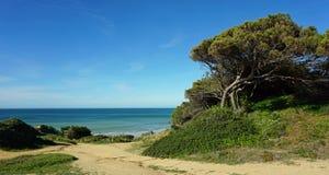 Albufeira beach. Beach of albufeira on the algarve coast of portugal royalty free stock photo
