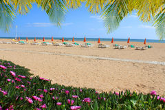 Albufeira beach with flowers and chairs Stock Photography