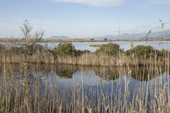 Albufera National Park; Alcudia; Majorca. Spain Royalty Free Stock Image