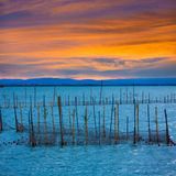Albufera sunset lake park in Valencia el saler Stock Images
