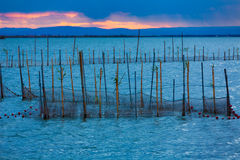 Albufera sunset lake park in Valencia el saler Stock Image