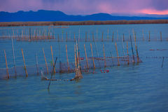 Albufera sunset lake park Valencia el saler Spain Royalty Free Stock Images