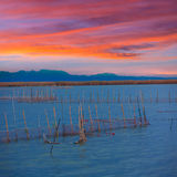Albufera sunset lake  in Valencia el saler Spain Stock Photo