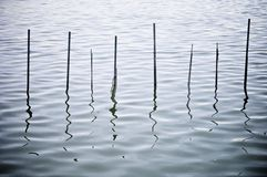 Albufera Stock Photo