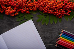 Album, colored pencils bunch of rowan on wooden table Royalty Free Stock Photo