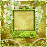 Album di foto verde dell'album Immagini Stock
