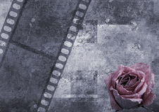 Album's page. Grunge background with flower  and film Royalty Free Stock Photos
