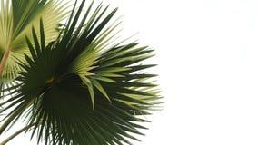 albumowy tła błękitny książki wizerunku liść palmy papieru fotografii tekstury drzewo zdjęcia royalty free