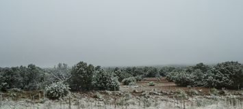 Albuquerque, New Mexico, neve nel deserto fotografie stock