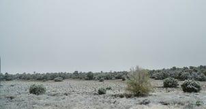 Albuquerque, New Mexico, neve nel deserto fotografia stock libera da diritti