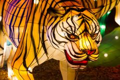 Chinese Lantern Festival New Year tiger lantern. ALBUQUERQUE, NEW MEXICO, USA- NOVEMBER 12,2017: Chinese Lantern Festival lit up at night to celebrate the Stock Images