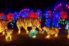 Chinese Lantern Festival New Year tiger lantern. ALBUQUERQUE, NEW MEXICO, USA- NOVEMBER 12,2017: Chinese Lantern Festival lit up at night to celebrate the Royalty Free Stock Photos