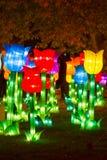 Chinese Lantern Festival New Year New Year Chinese tulip. ALBUQUERQUE, NEW MEXICO, USA- NOVEMBER 12,2017: Chinese Lantern Festival lit up at night to celebrate Stock Photos