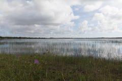 Alcaçuz盐水湖, Nizia弗洛雷斯塔, RN,巴西 库存照片