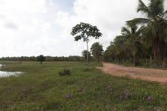 Alcaçuz盐水湖, Nizia弗洛雷斯塔, RN,巴西 免版税库存照片