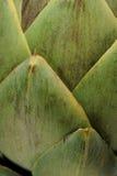 alcachofa Imagen de archivo