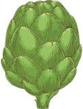 Alcachofa de globo verde entera Fotos de archivo