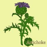 alcachofa Ejemplo de una planta en un vector con la flor para u stock de ilustración