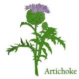 alcachofa Ejemplo de una planta en un vector con la flor para u ilustración del vector