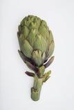 Alcachofa en blanco Imagen de archivo libre de regalías