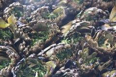 Alcachofas cocinadas en la parrilla Fotos de archivo