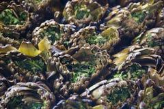 Alcachofas cocinadas en la parrilla Imagen de archivo