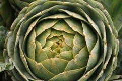 Alcachofas orgánicas Fotografía de archivo
