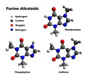 Alcalóides - cafeína, theobromine, theophylline Foto de Stock