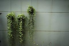 Alcaloides en la pared Imagen de archivo