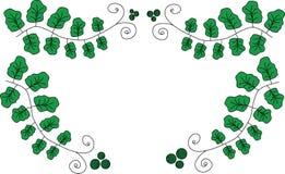 Alcance de las hojas del verde con los krausens Imagen de archivo