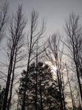 Alcance de los árboles para el cielo Imágenes de archivo libres de regalías