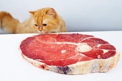 Alcance do gato a carne fotos de stock