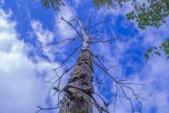 Alcance para el cielo azul Fotos de archivo