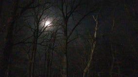 Alcance para a lua fotografia de stock