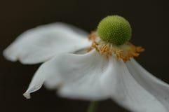 Alcangando a flor fotografia de stock royalty free