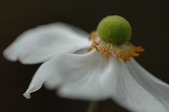 Alcanzar la flor Fotografía de archivo libre de regalías