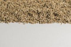 alcaravea Imagen de archivo