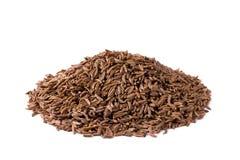 Alcaravia no fundo branco Fotos de Stock