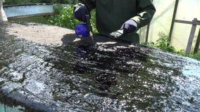Alcatrão da configuração do reparo das mãos do homem do construtor na superfície do telhado com ferramentas especiais 4K filme