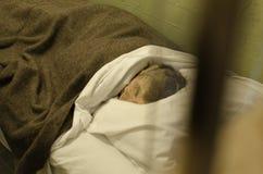 ALCATRAZ监狱,旧金山加利福尼亚 免版税库存图片
