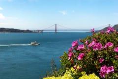 Alcatraz flowers. Vivid flower garden at Alcatraz with the Golden Gate bridge in the background stock photos