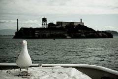 Alcatraz with gull Royalty Free Stock Photos