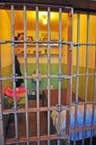 Alcatraz-Insel, San Francisco, Kalifornien, die Vereinigten Staaten von Amerika, USA Lizenzfreie Stockfotos