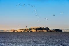 Alcatraz Island. San Francisco, California. Alcatraz Island in the San Francisco Bay. Seagull flying, in motion Royalty Free Stock Image
