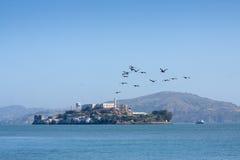 Alcatraz met vogels Stock Afbeeldingen