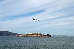 Alcatraz 3 Stock Photos