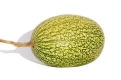 Alcayota de fruit Photos stock