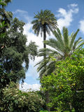 Alcazar gardens. Royalty Free Stock Image