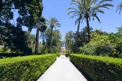 alcazar uprawia ogródek Seville Obraz Stock